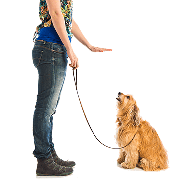 Dog Training Now- Dog Training Programs-Dog Training