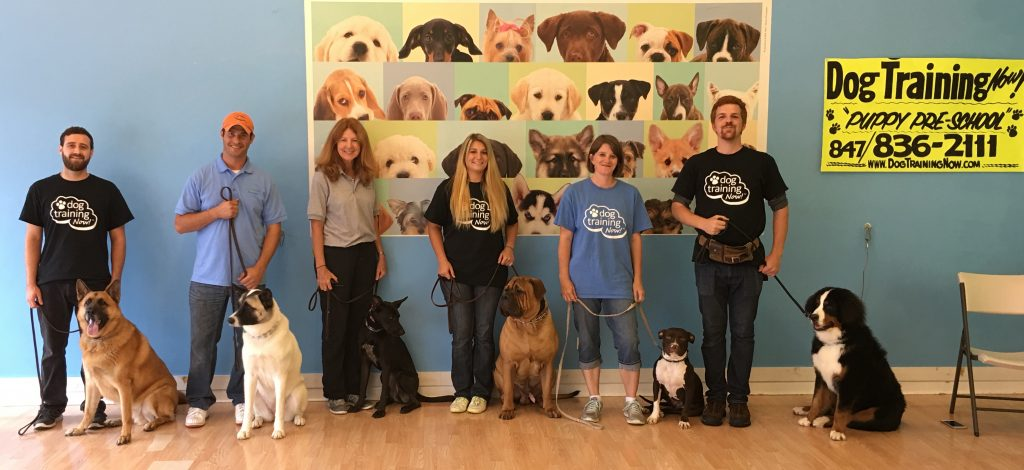 Dog Training Now- Our Location-Meet Dog Training Now Trainers