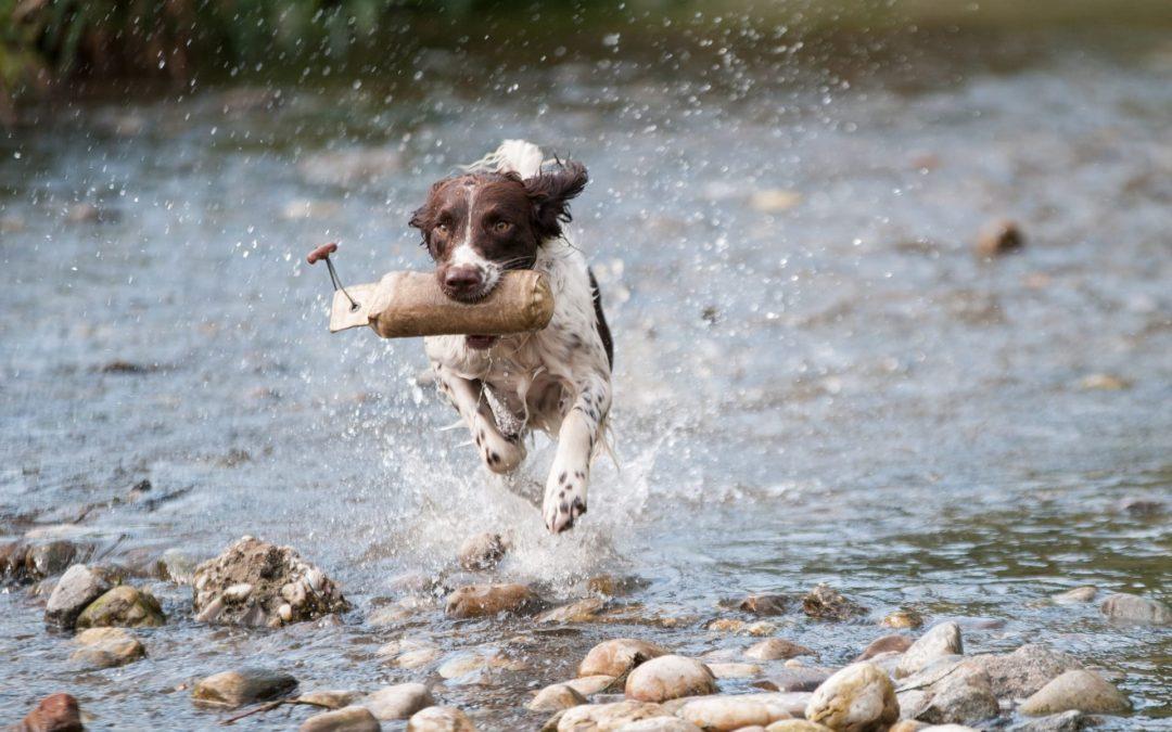 Summertime Puppy Dangers