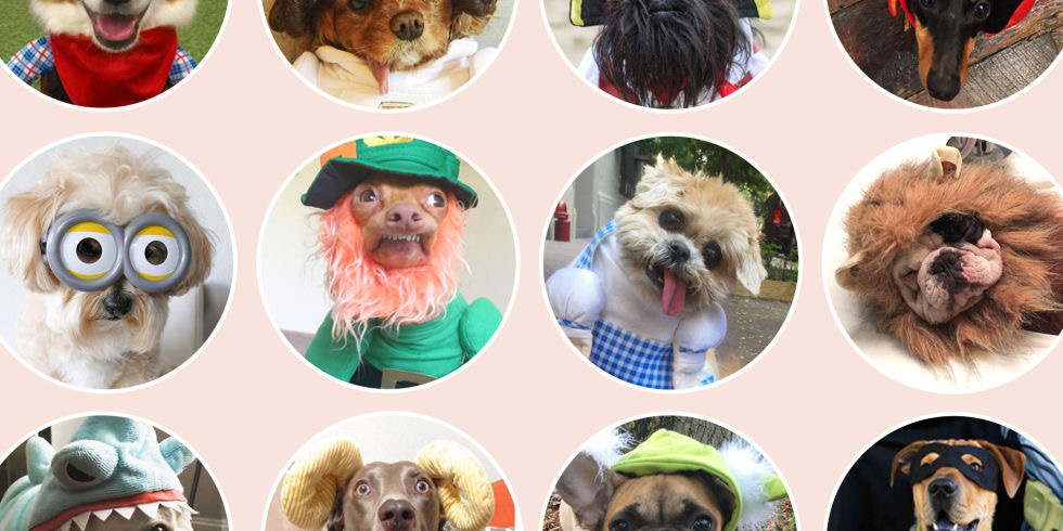 Funny Halloween Costumes for Your Dog