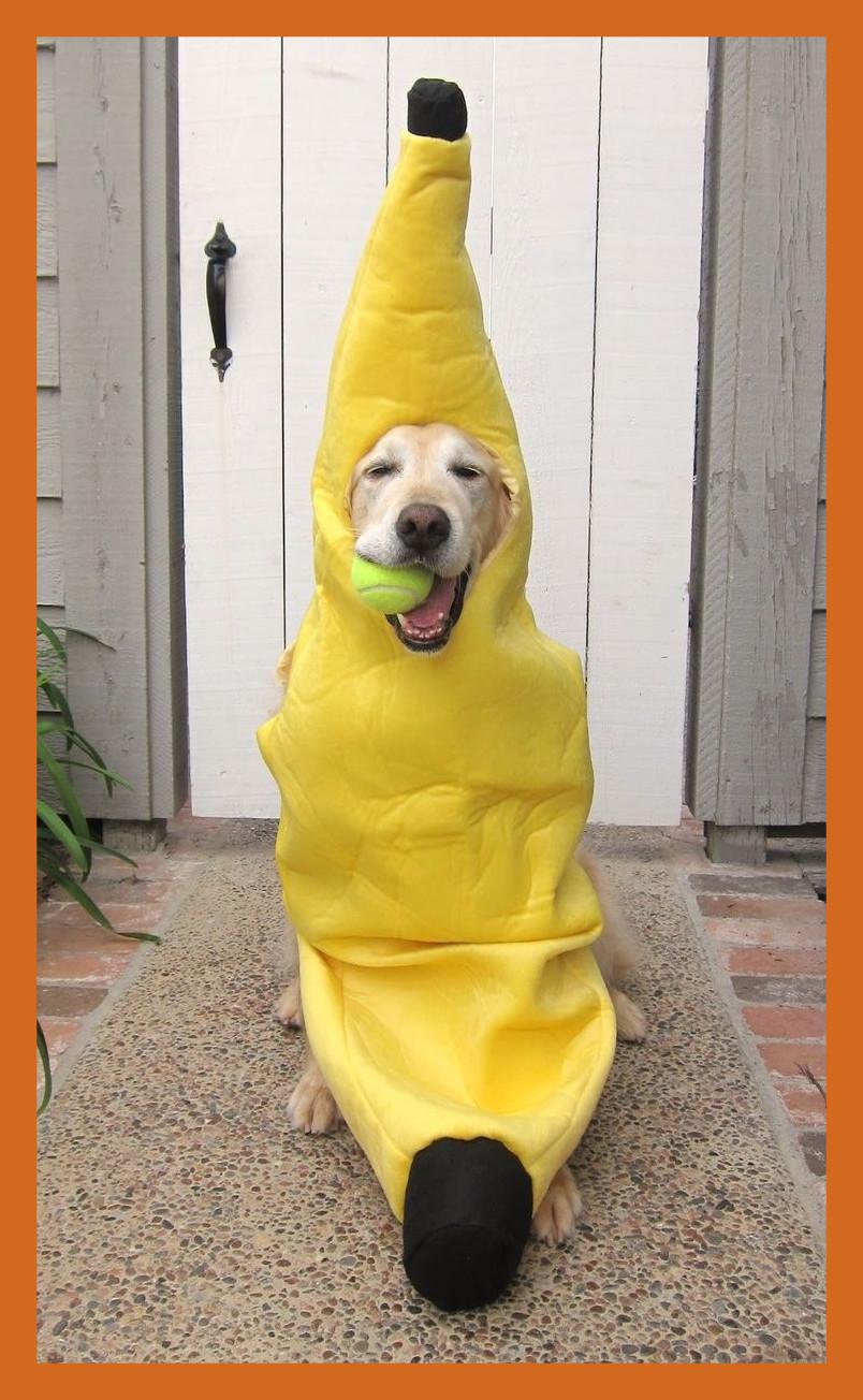 Dog Training Now